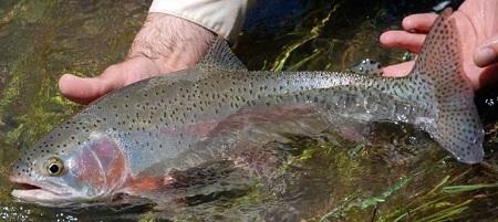Pescare la trota in base al periodo