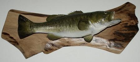 Come imbalsamare un pesce
