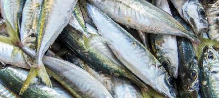Pesca ai Sugarelli dalla barca