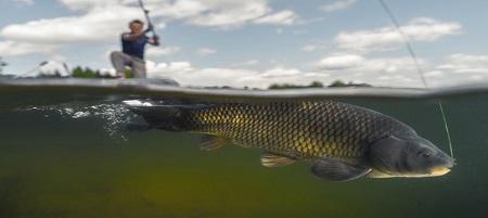 Come pescare le carpe