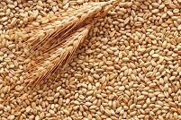 Come preparare le granaglie grano