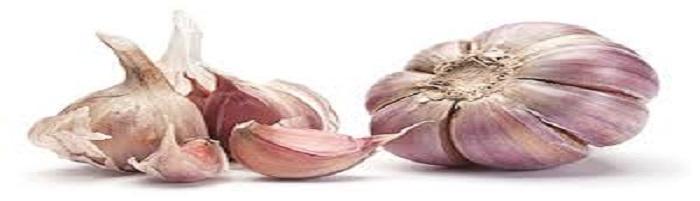 Esca giusta per la carpa aglio 1