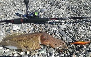Pescare le seppie