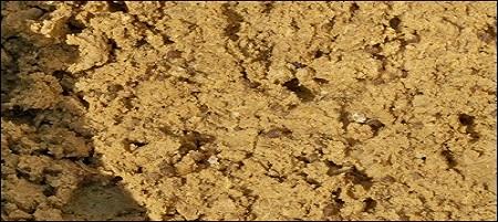 Ricetta pastura pastura-alla-sarda